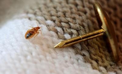избавиться от паразитов чесноком