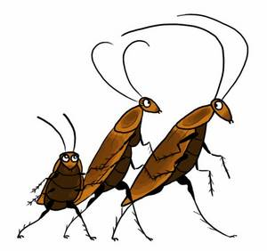 народные средства борьбы с тараканами