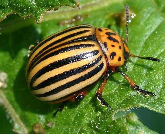 Дачные вредители. Как бороться с улитками, муравьями и кротами?