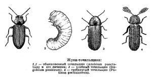 виды жуков точильщиков