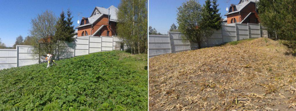до и после гербицидной обработки